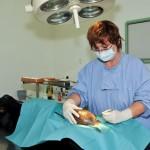 Clinique vétérinaire de Villelongue dels Monts
